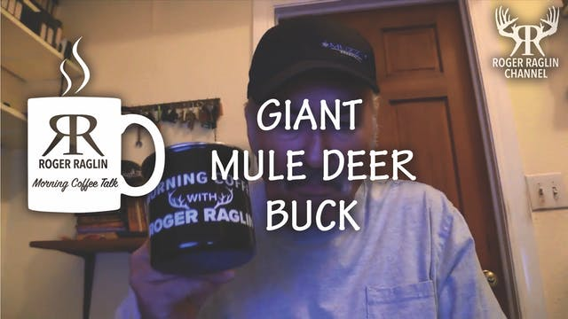 A Giant Mule Deer Buck • Morning Coffee