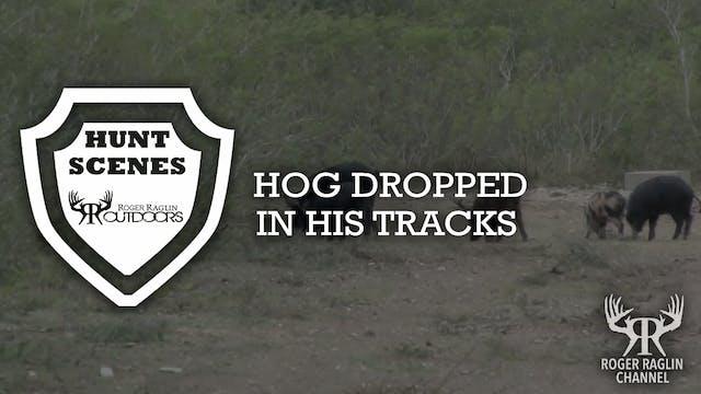 Hog Dropped in His Tracks • Hunt Scenes