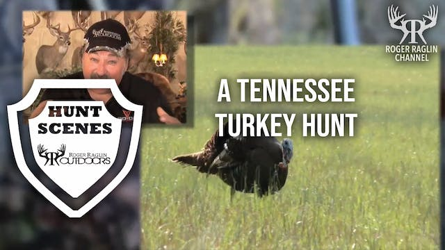 A Tennessee  Turkey Hunt • Hunt Scenes