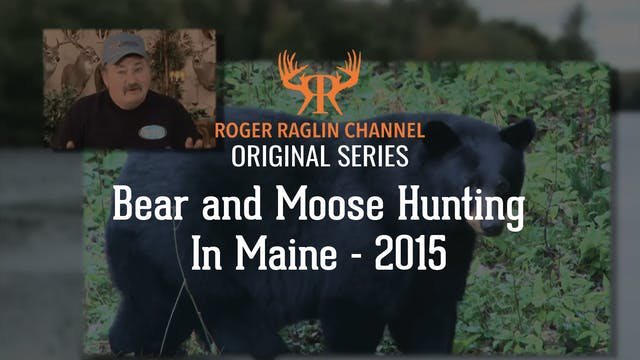Black Bear and Moose in Maine • 2015