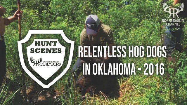 Relentless Hog Dogs in Oklahoma - 2016 • Hunt Scenes