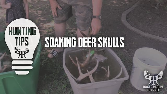 Soaking Deer Skulls • Hunting Tips