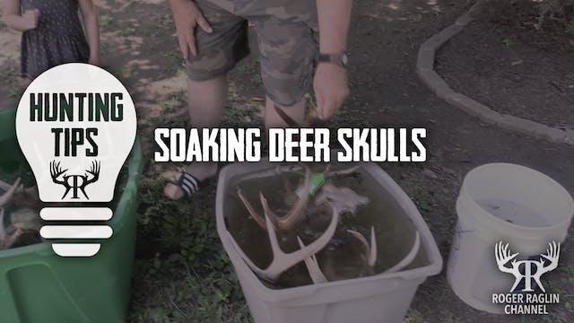 Soaking Deer Skulls • Hunting Tips