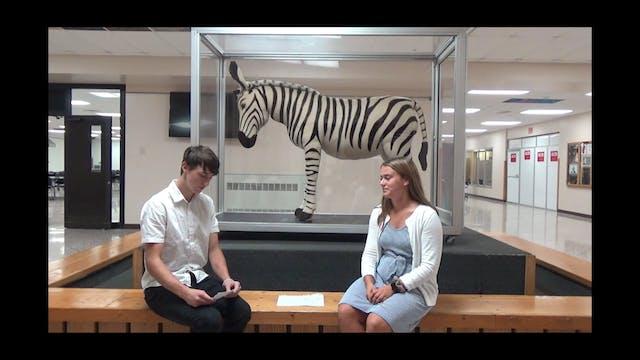 Zebra Shorts - 30 Minutes - 11-7-19