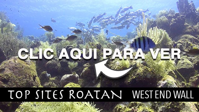 West End Wall Roatan Top Sites