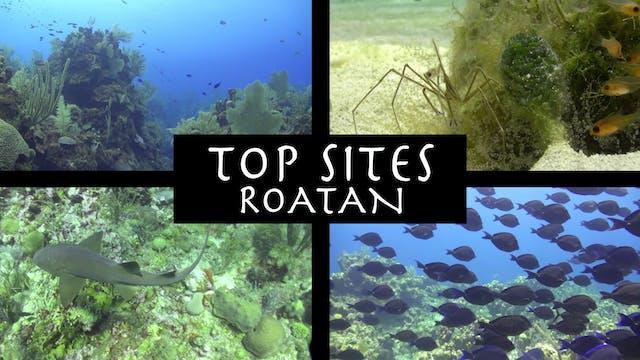 CANETTV Viajes / Roatan Top Sites