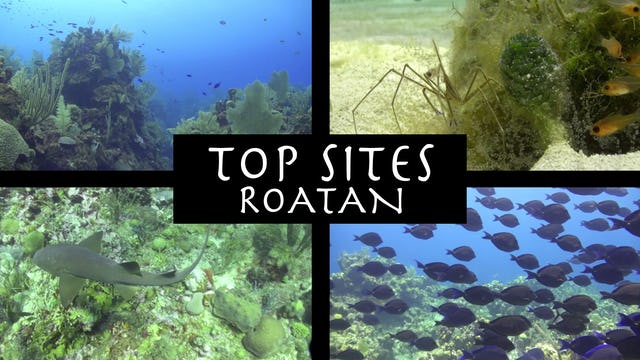 CANETTV Viajes / Roatan Top Sites