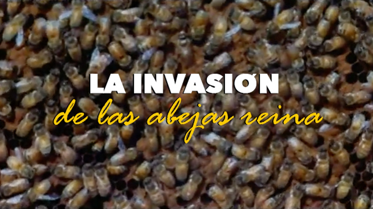 CANETTV Clásicos / La Invasión de las Abejas Reina