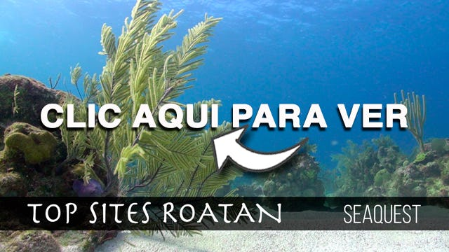 Seaquest Shallow Roatan Top Sites