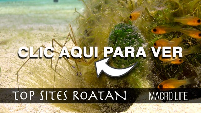 Macro Life Roatan Top Sites
