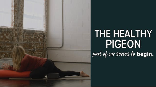 The Healthy Pigeon