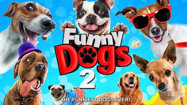 Funny Dogs 2