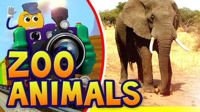 Ep.02-Real Zoo Animals-PicTrain
