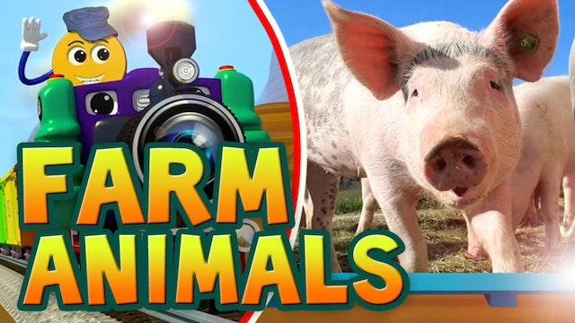 Ep.03-Real Farm Animals-PicTrain