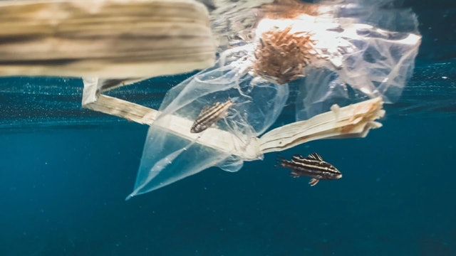 Interview: What can we do about ocean plastic pollution with Nikkey Dawn