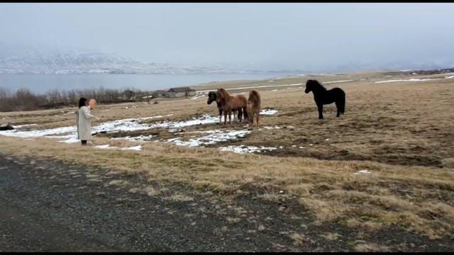 Horse Medicine Healing