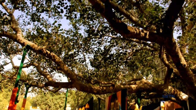 Giác Ngộ : Theo Bước Chân Phật (Phần 15)
