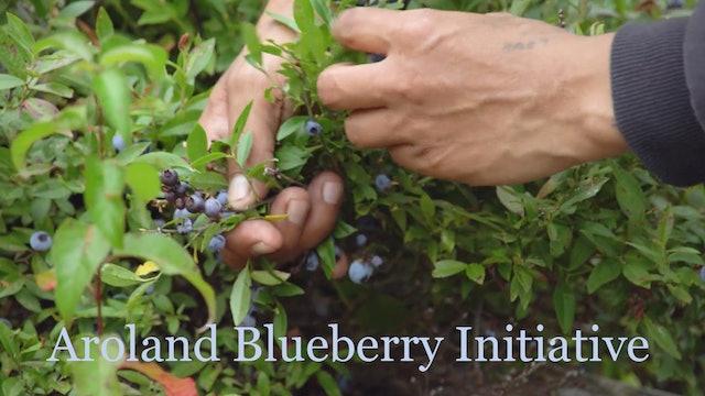 Aroland Blueberry Initiative