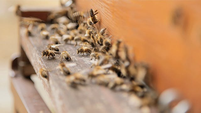 The Energy of the Bees
