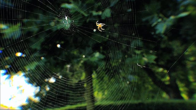 The Spider is a Chief Engineer
