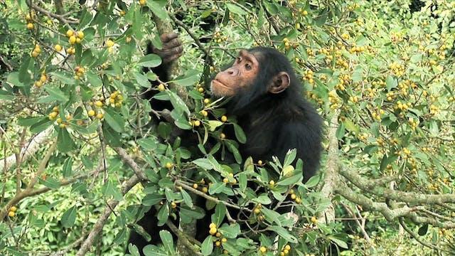 Monkeys and plants