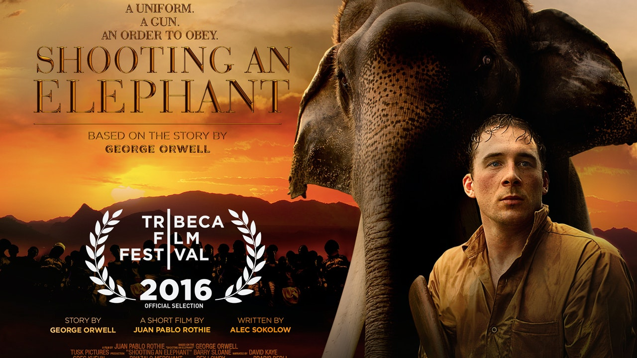 shooting an elephant shooting an elephant hd