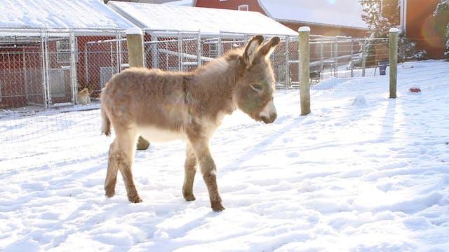 Buckles' First Snowfall