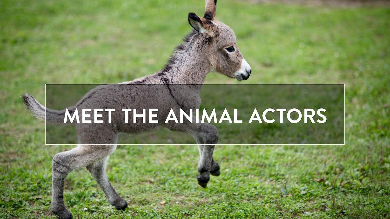 Meet the Animal Actors