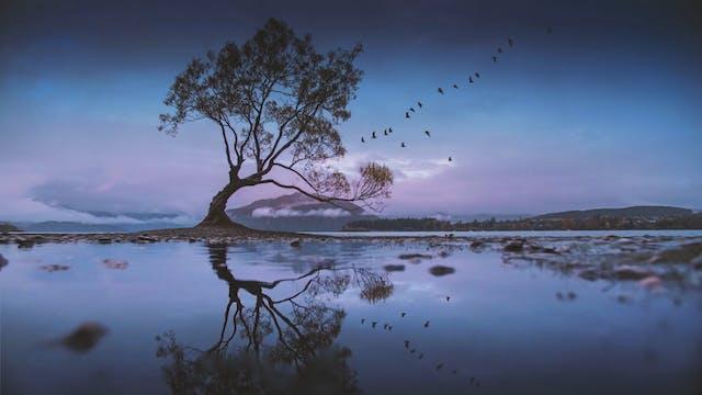 Mystery Tree (15m)