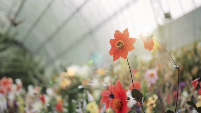 Hothouse Flowers (5m)