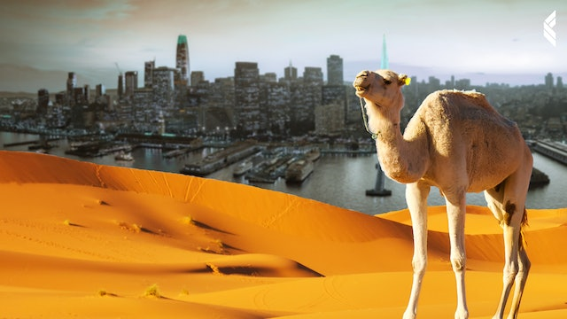 The Point: This is Why Camels are the New Unicorns