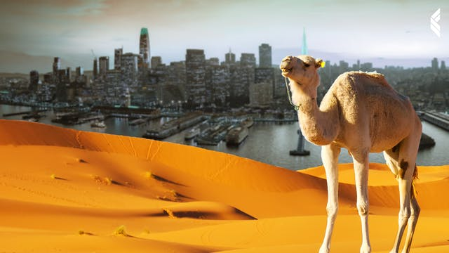 The Point: This is Why Camels are the...