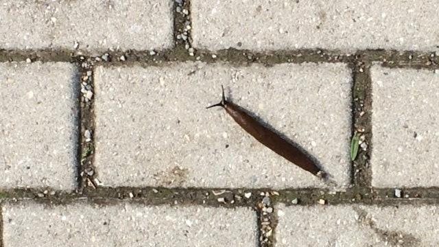 Slug & ant