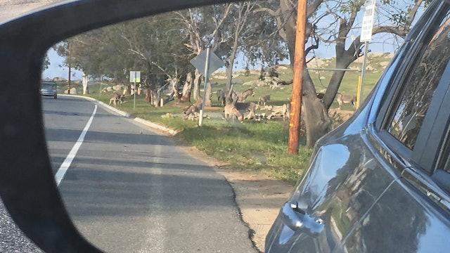 Donkeys, Wild, Playful Moreno Valley CA