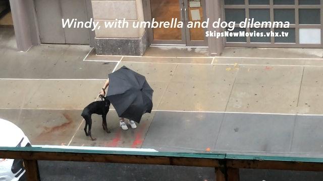 Windy, w umbrella & dog dilemma