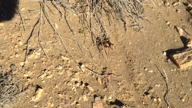 Tarantula w shadow