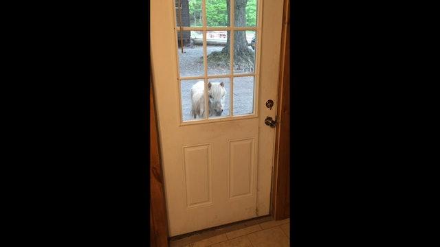 Pony at the door