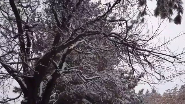 KABUL SNOW 2019