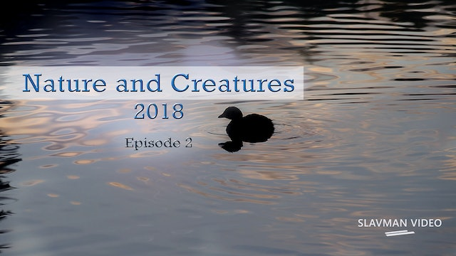 Nature and Creatures, Ep.2