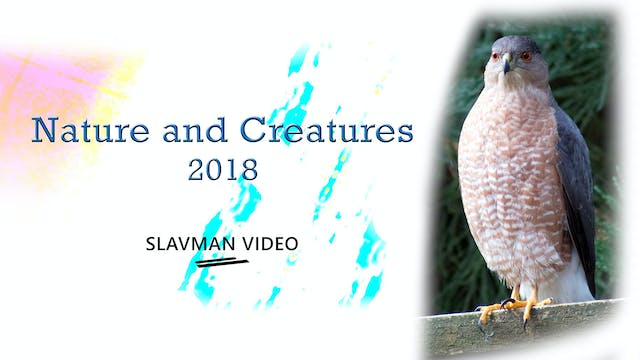 Nature and Creatures Video Collection