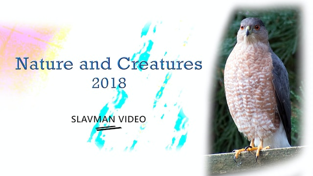 Nature and Creatures 2018