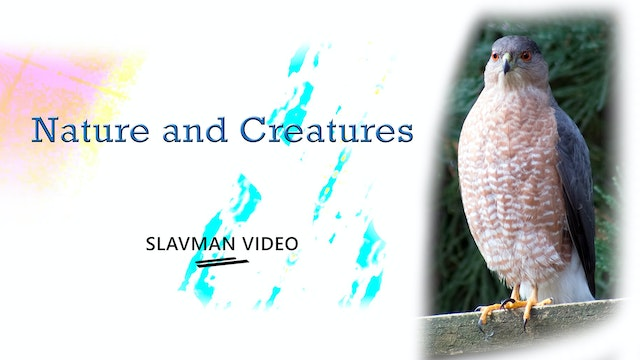 Nature and Creatures