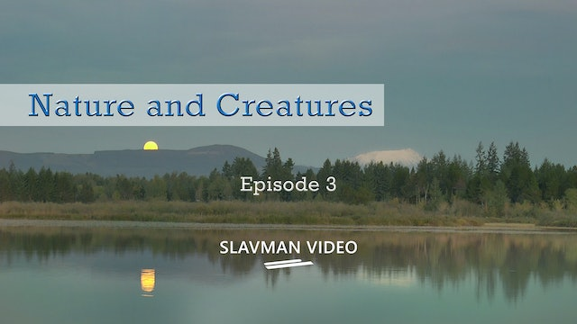 Nature and Creatures, Ep.3