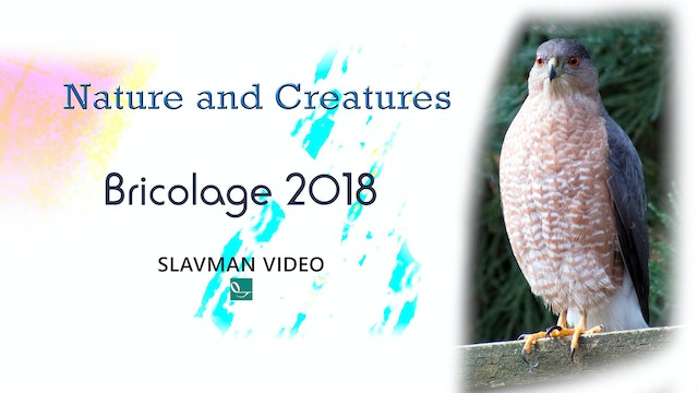 Nature and Creatures - Bricolage 2018, Ep.1