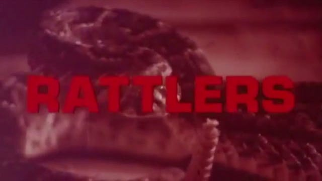 After Hours Cinema: Rattlers