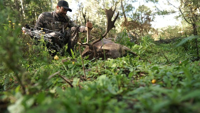8.3 MEAT ON THE BARBIE - Australia Fallow Deer and Wild Hog with Remi Warren