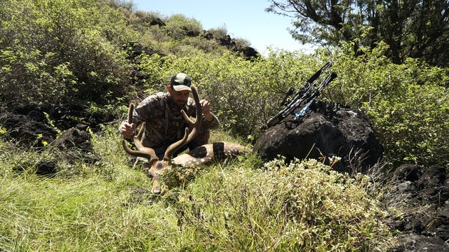 8.1 WILD GAME LUAU - Hawaii Axis Deer and Spanish Goat with Remi Warren
