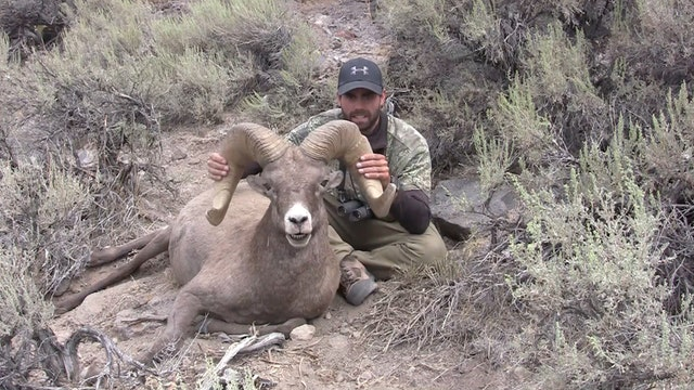 5.4 California Bighorn Sheep in NV wi...