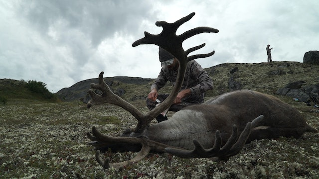 7.8 Rad Dad - Alaska Caribou with Rem...