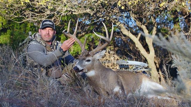8.6 MOO COW BUCKS - Whitetail Deer wi...